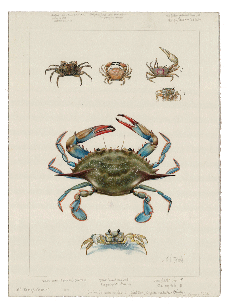 Atlantic Crabs