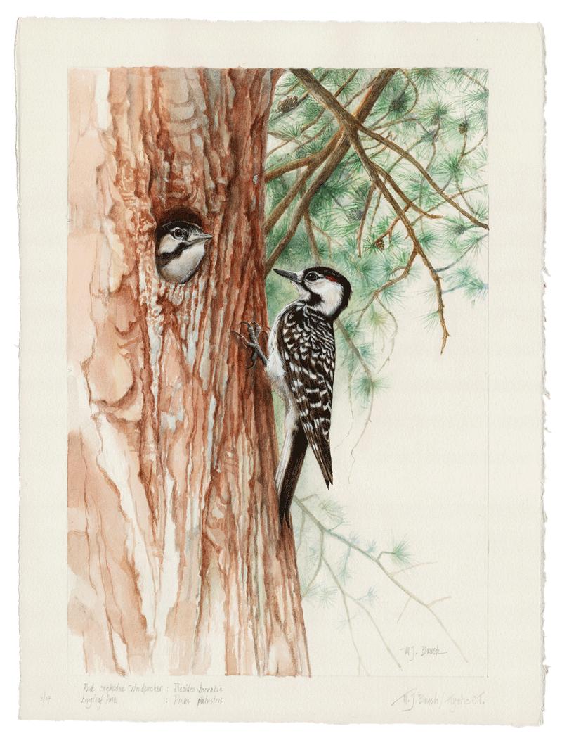 Woodpecker & Pine